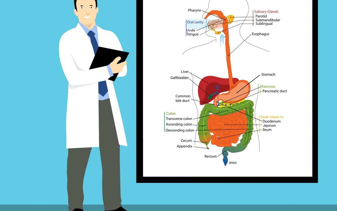 Les cancers du pancréas en 12 points clés